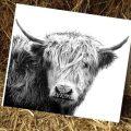 Kelly Hood Cow Art