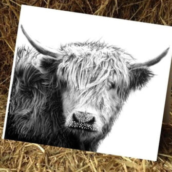 Kelly Hood Cow Art